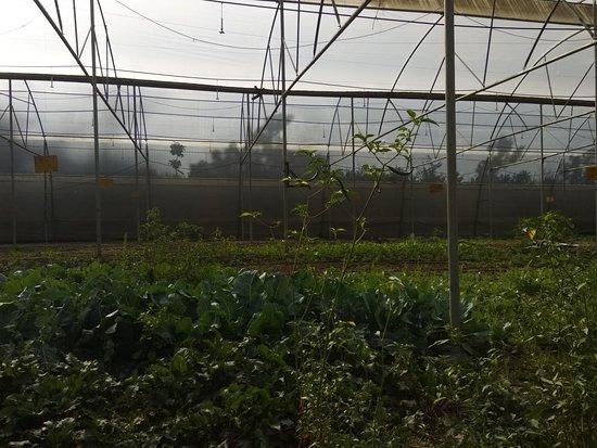 The Pahadi Organic ภาพถ่าย