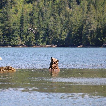 Glendale Cove, Canada: photo5.jpg