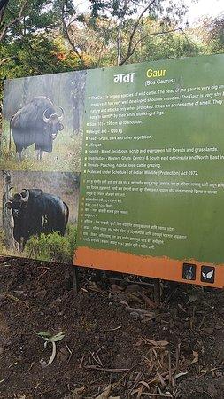 Rajiv Gandhi Zoological Park : gaur