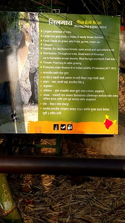 Rajiv Gandhi Zoological Park : information on nilgai