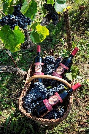 Mannucci Droandi: I nostri vini da vitigni autoctoni - Barsaglina Pugnitello e Foglia Tonda