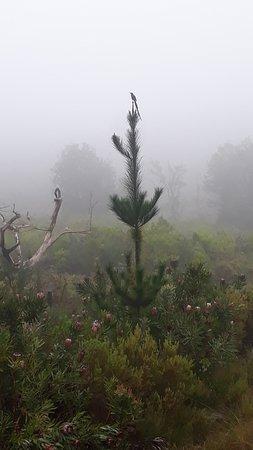 Marloth Nature Reserve照片