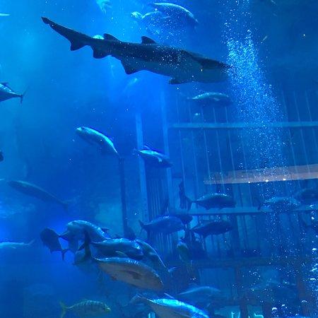 Dubai Aquarium & Underwater Zoo ภาพถ่าย