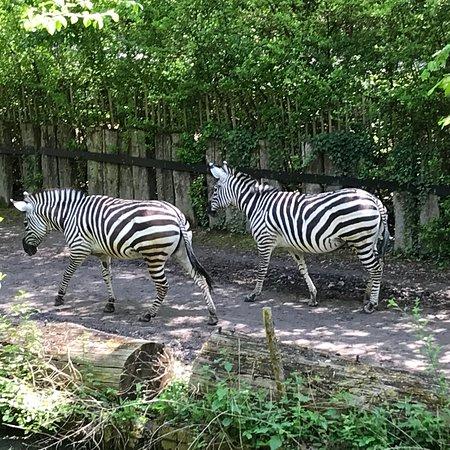 Lille Zoo: photo2.jpg
