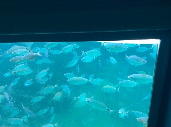 Day at sea with Lunch: Poissons vus par la coque transparente