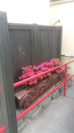 Burien, واشنطن: Flowers in bloom.
