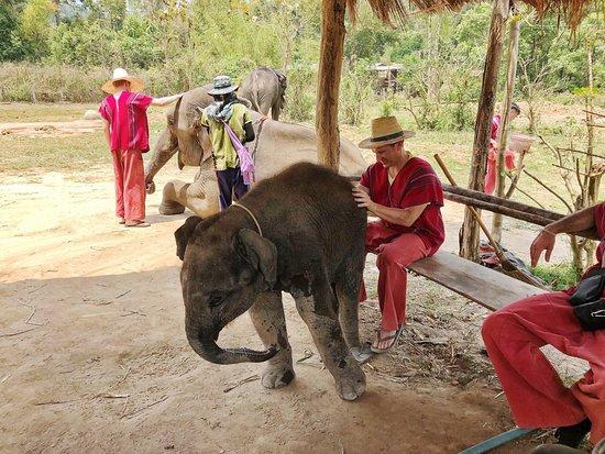 Karen's Tribe Native Elephants : Karen's Tribe Native Elephants