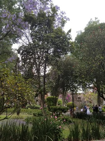 Coyoacan: Wedding in garden at Parroquia de San Jacinto.