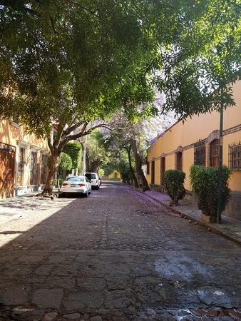 Coyoacan: Jacaranda trees in April!