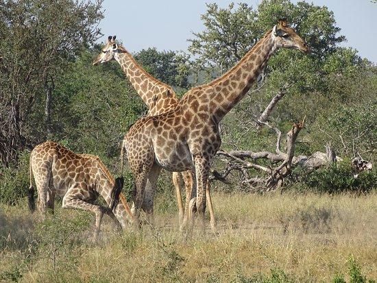 Timbavati Private Nature Reserve, South Africa: Blick von der Lunch-Terrasse auf das Wasserloch