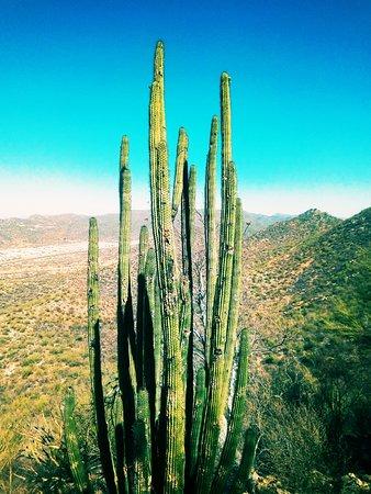 Cerro El Bachoco: Cerro del Bachoco