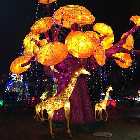 Dubai Garden Glow照片