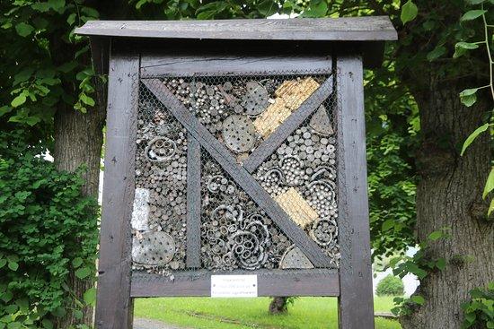 Bibelpflanzengarten: Königstein - Bibelgarten 7