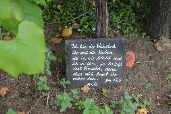 Bibelpflanzengarten: Königstein - Bibelgarten 9