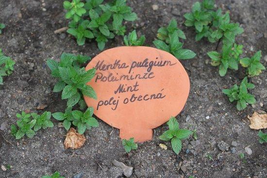 Bibelpflanzengarten: Königstein - Bibelgarten 10