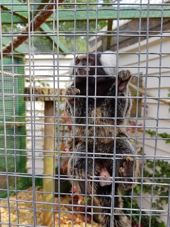 Reedham, UK: Pettitts Animal Adventure Park