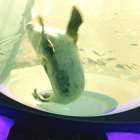大阪水族馆照片