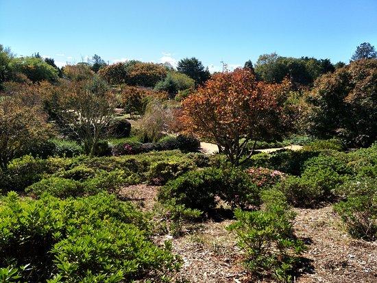 Japanese Garden : Gardens
