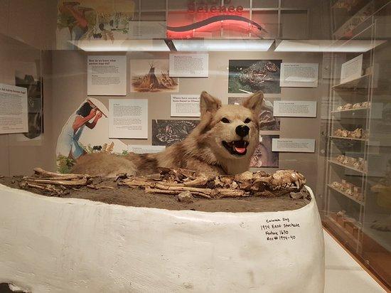 Illinois State Museum ภาพถ่าย