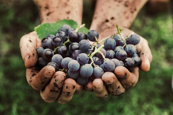 Hand Picked Wine Tours