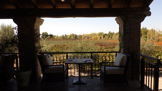 Mendoza Wine Camp: Vistalba