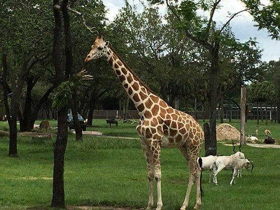 写真Disney's Animal Kingdom Villas - Jambo House枚