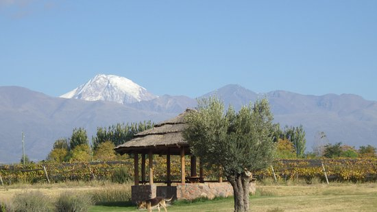 Mendoza Wine Camp: Domaine Bousquet