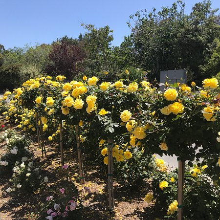 Palos Verdes Estates, Kaliforniya: photo9.jpg