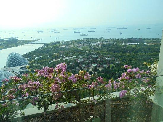 Marina Bay Sands : 47階の部屋から見える景色