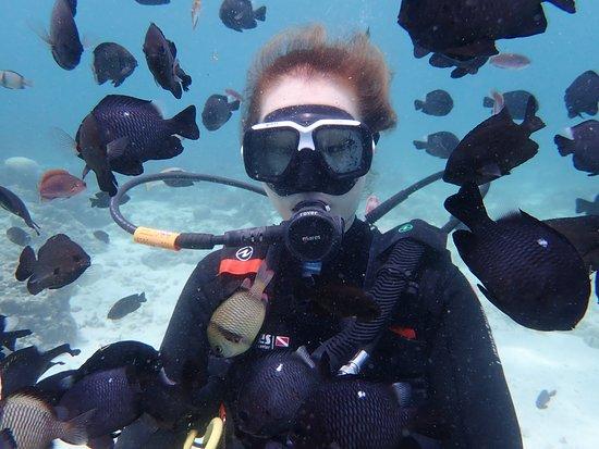 写真Deep Dive枚