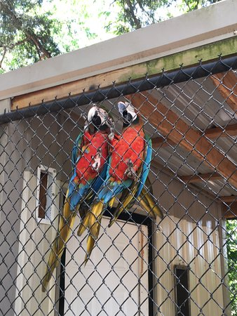 Branson's Promised Land Zoo Admission Ticket: Macaws