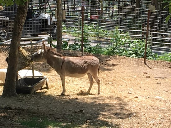 Branson's Promised Land Zoo Admission Ticket: A donkey!