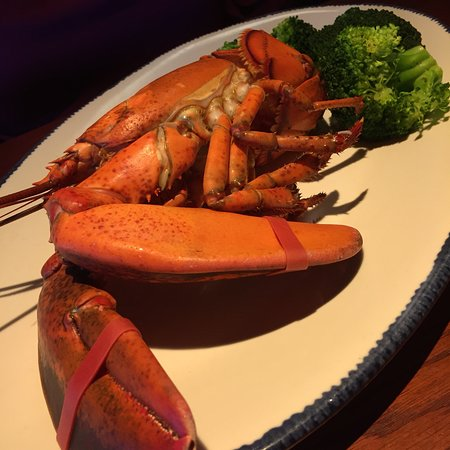 Had Lunch at the Red Lobster