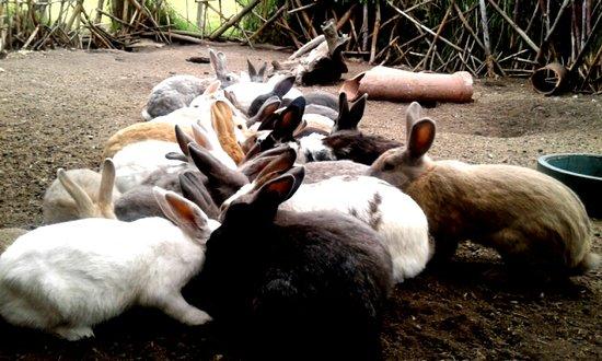 Bioparque La Reserva: Conejos (Bienestar animal)