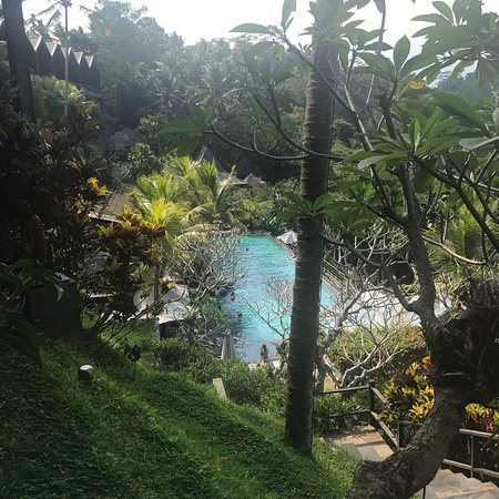 Jungle Fish Pool Bar: Drinks at the pool