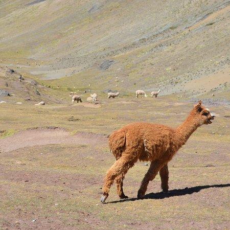 Emotion Tour Peru照片