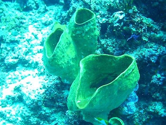 Bunaken Island, Indonezja: Bunaken National Marine Park