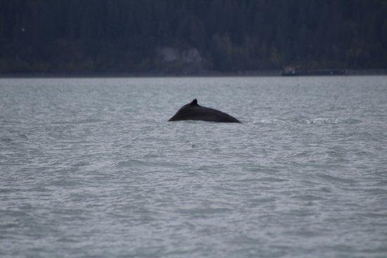 Northern Latitude Adventures: Sea Otters