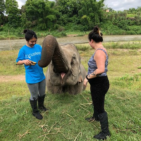 MandaLao Elephant Conservation : LOVELY experience playing with the mother, grandmother, and baby elephants! The guides also prov