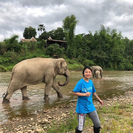 MandaLao Elephant Conservation: LOVELY experience playing with the mother, grandmother, and baby elephants! The guides also prov