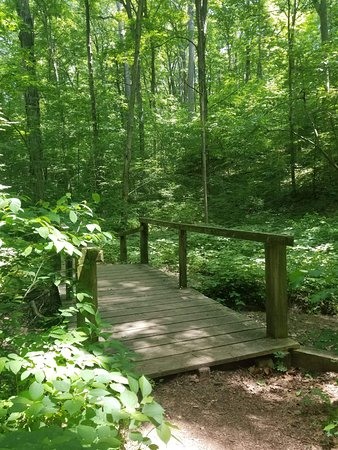 Turkey Run State Park: another wooden bridge