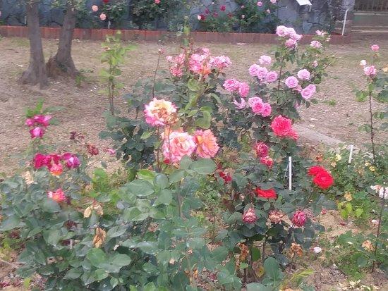 Roseto Botanico Carla Fineschi: 20180602_180309_large.jpg