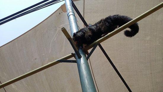 Zoo Negara: Animal hangging