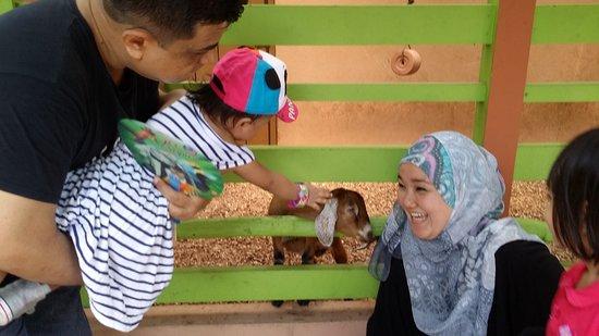 Zoo Negara: Petting