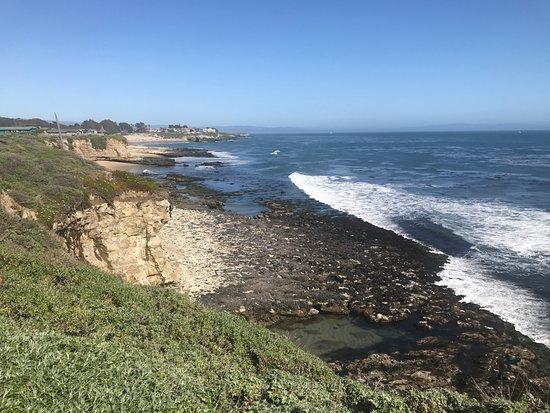 Seymour Marine Discovery Center : Coast