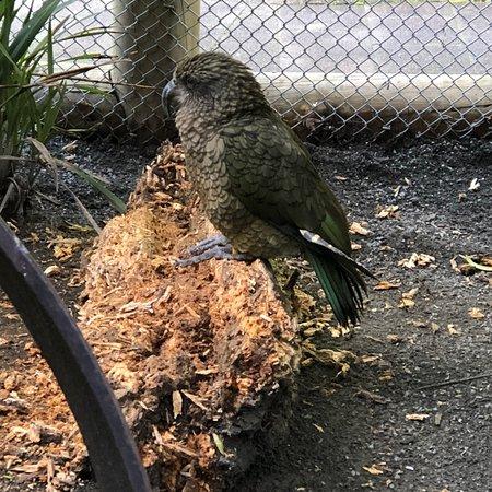 Paradise Valley Springs Wildlife Park: photo4.jpg