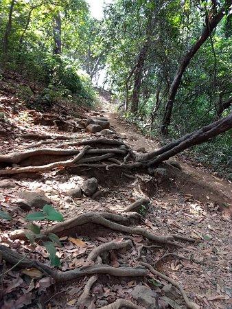 Karnala Bird Sanctuary照片
