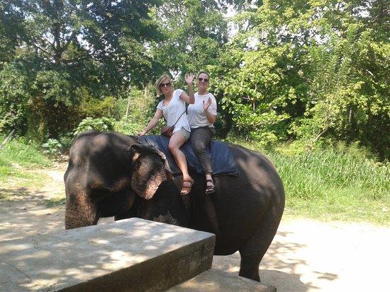 Lanka Inora Travels : Elephant ride Sri lanka