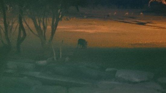 Okapuka Ranch: dito