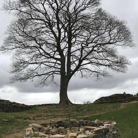 Northumberland National Park, UK: photo2.jpg